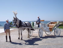 Horse and carriage can be organised in Ayia Napa