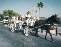 Horse-drawn carriage, Cyprus