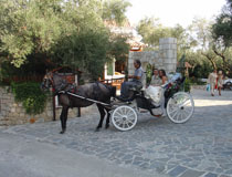 Horse-drawn carriage, Zante